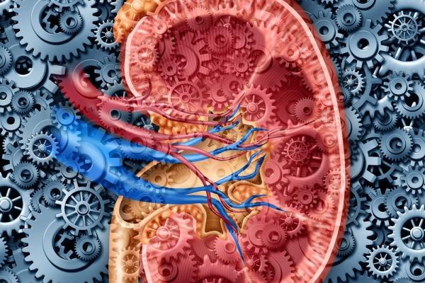 Что такое рак надпочечников? Виды опухолей